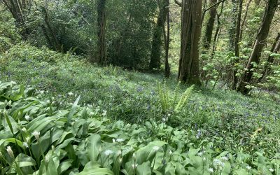 Bluebells, Wild Garlic and Sustainable Capitalism at a Crossroads